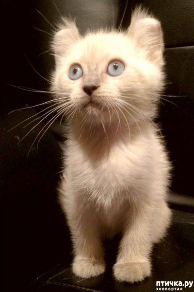 фото 5: Жизнерадостный малыш кинкалоу