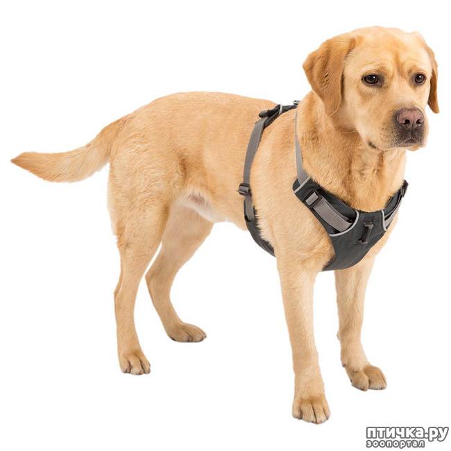 фото 2: Шлейка для собаки - за и против