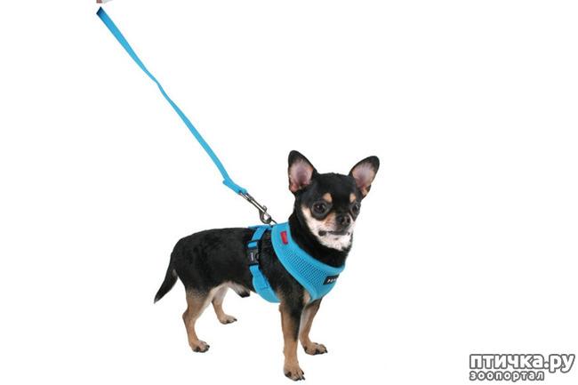фото 5: Шлейка для собаки - за и против