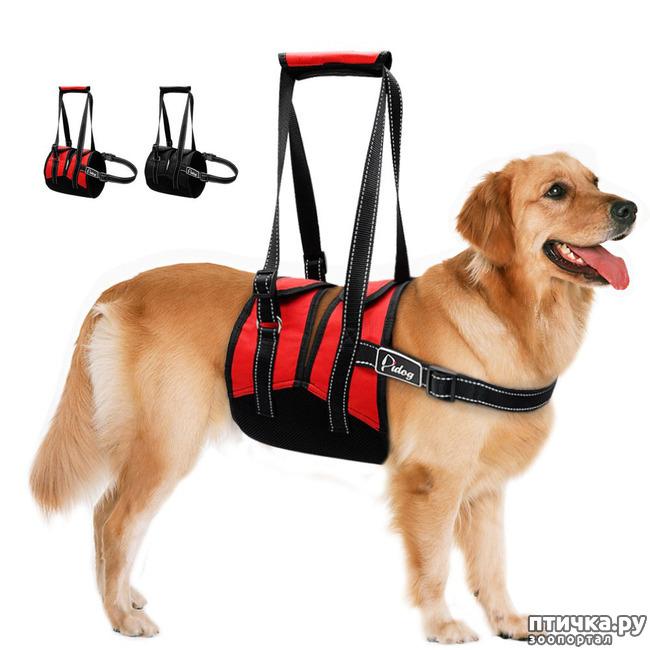 фото 6: Шлейка для собаки - за и против