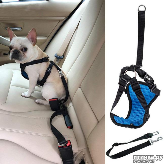 фото 9: Шлейка для собаки - за и против