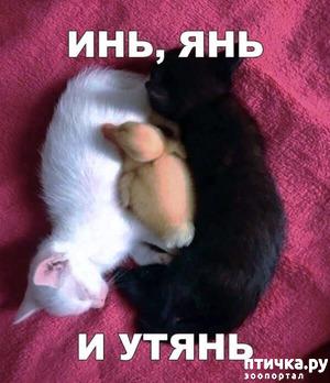 фото: Инь и янь
