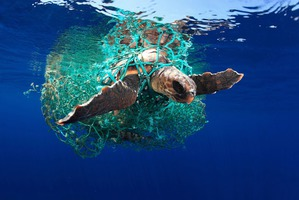фото: Удивительные снимки морских обитателей