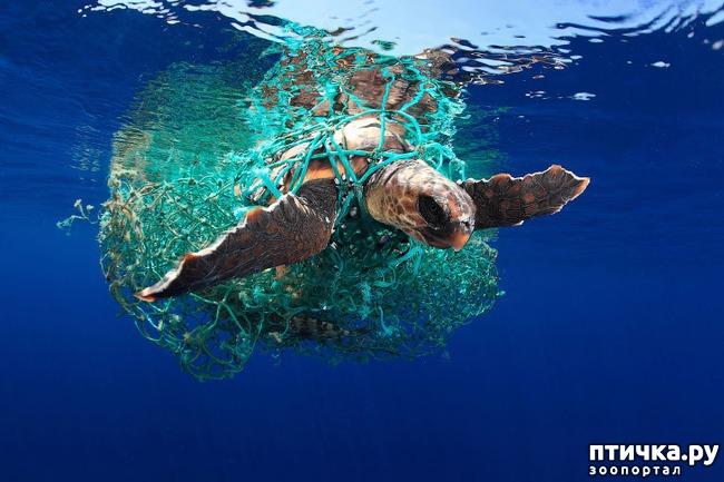 фото 1: Удивительные снимки морских обитателей