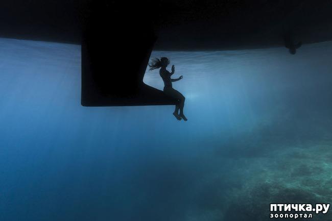 фото 2: Удивительные снимки морских обитателей