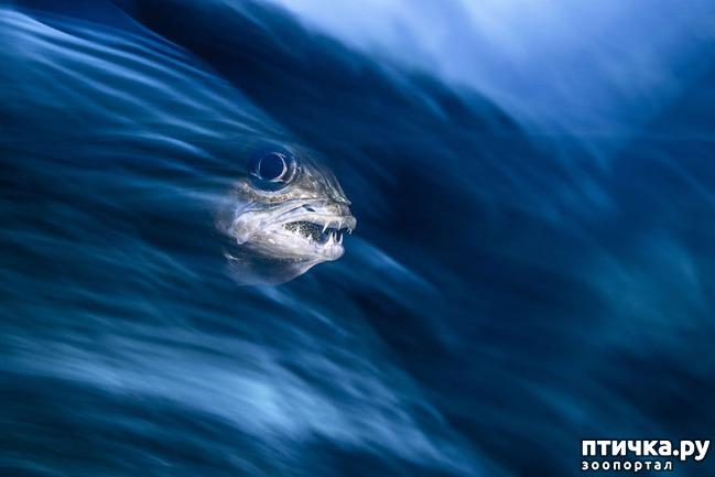 фото 4: Удивительные снимки морских обитателей