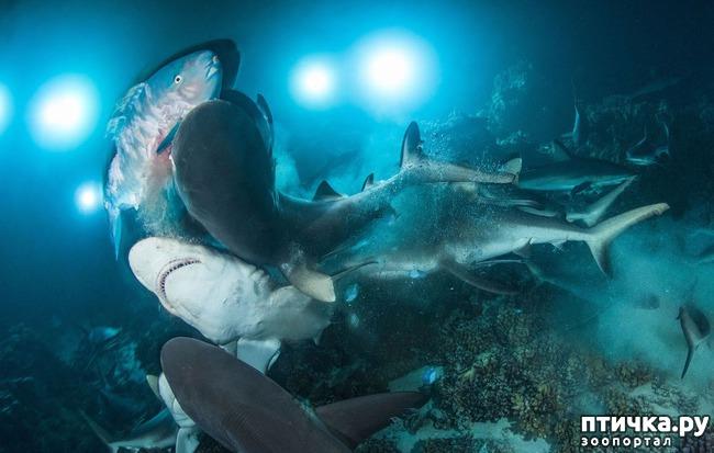 фото 5: Удивительные снимки морских обитателей