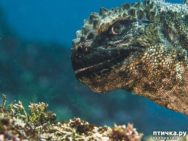 фото 6: Удивительные снимки морских обитателей
