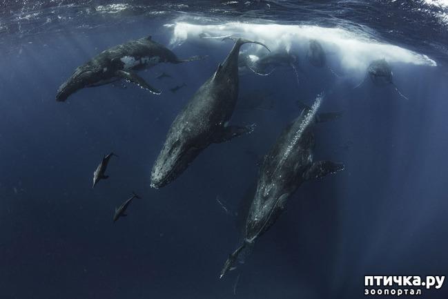фото 7: Удивительные снимки морских обитателей