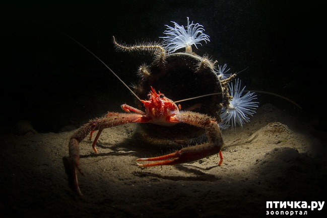 фото 8: Удивительные снимки морских обитателей