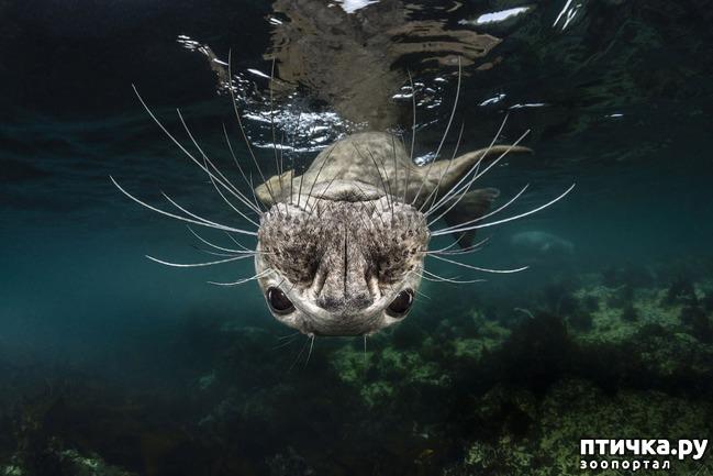 фото 9: Удивительные снимки морских обитателей