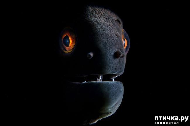 фото 10: Удивительные снимки морских обитателей