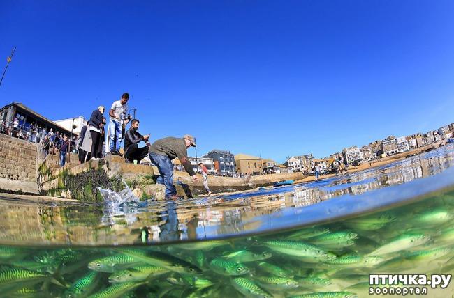 фото 12: Удивительные снимки морских обитателей