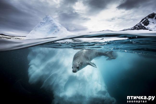 фото 14: Удивительные снимки морских обитателей