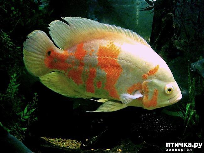 фото 6: Оскары в аквариуме