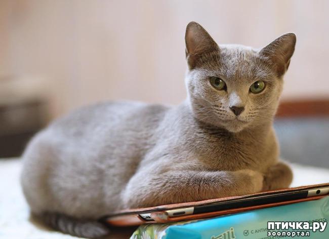фото 4: Стерилизация кошки.