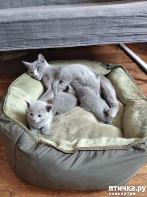 фото: Стерилизация кошки.