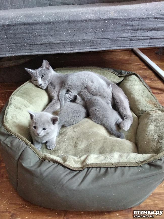 фото 1: Стерилизация кошки.