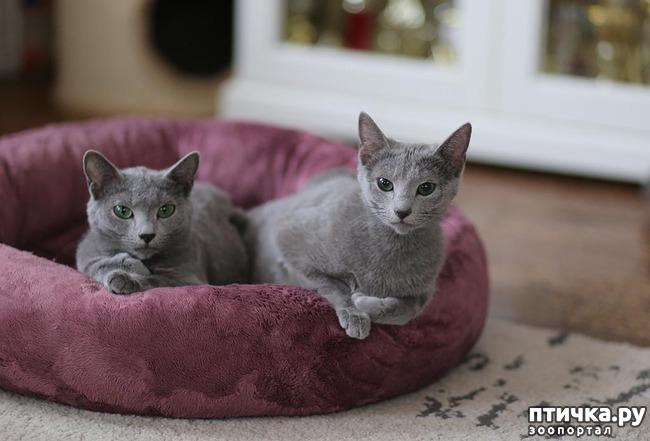 фото 2: Стерилизация кошки.