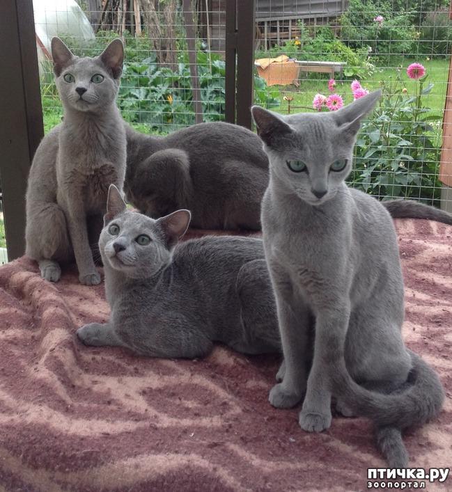 фото 3: Стерилизация кошки.