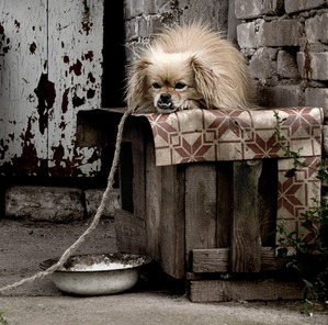 фото: Популяризация породы или смерть под софитами.