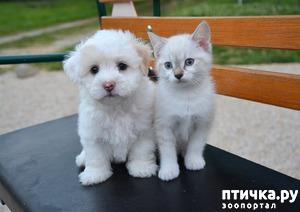 фото: Почему не стоит дарить животных