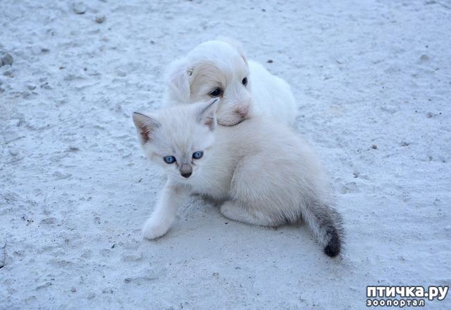 фото 3: Почему не стоит дарить животных