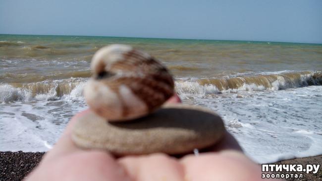 фото 6: Морской приветик!