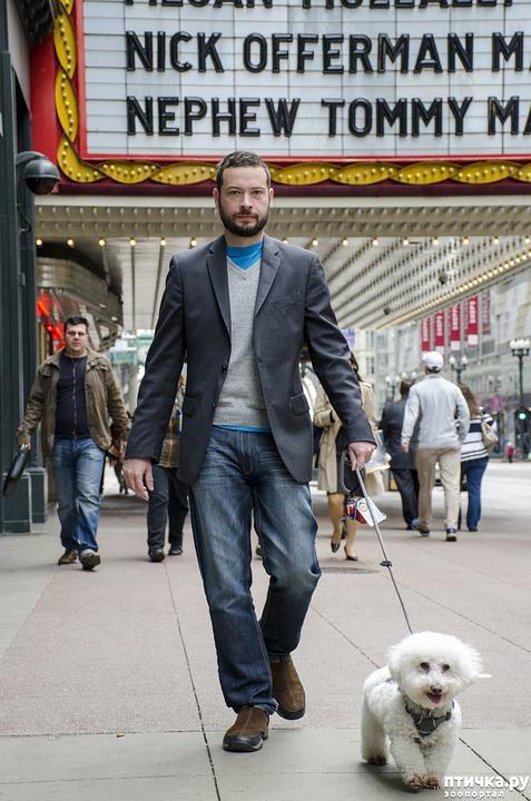фото 1: Собаки в общественных местах.