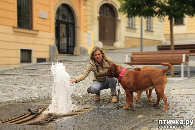 фото 4: Собаки в общественных местах.