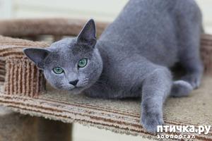 фото: Кастрация кота