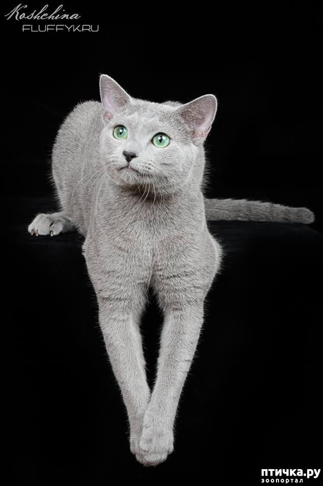 фото 2: Кастрация кота