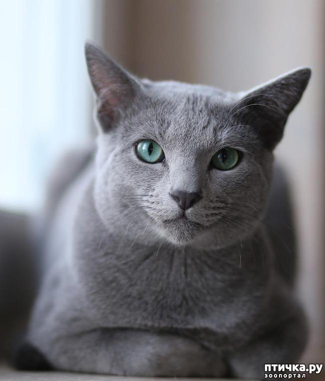 фото 3: Кастрация кота