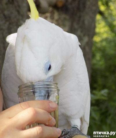 фото 1: Сказание о распоясовшейся птице