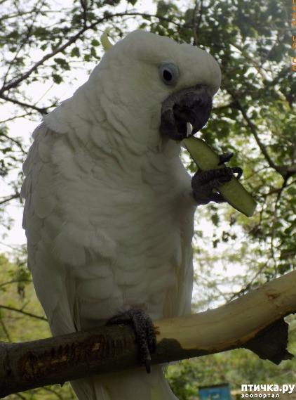 фото 3: Сказание о распоясовшейся птице