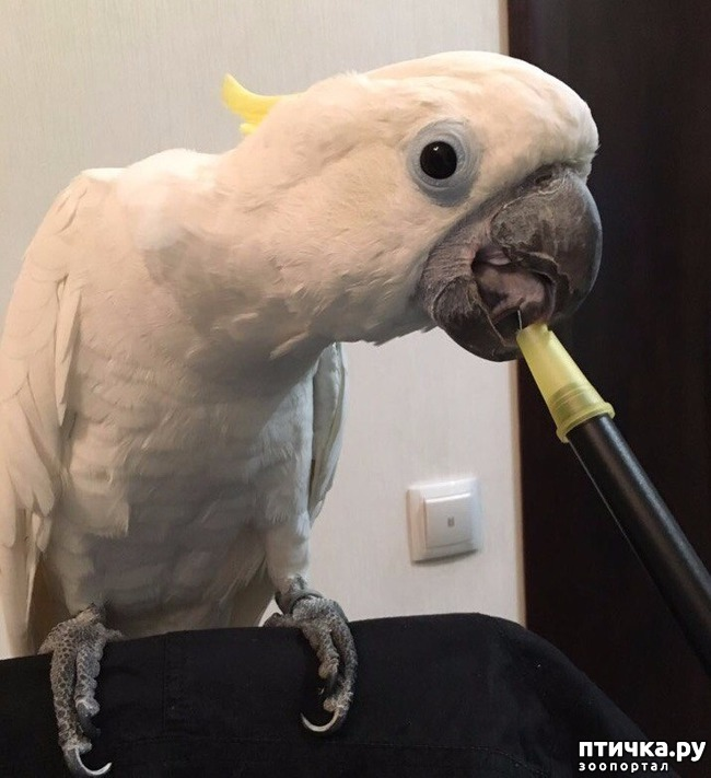 фото 5: Сказание о распоясовшейся птице