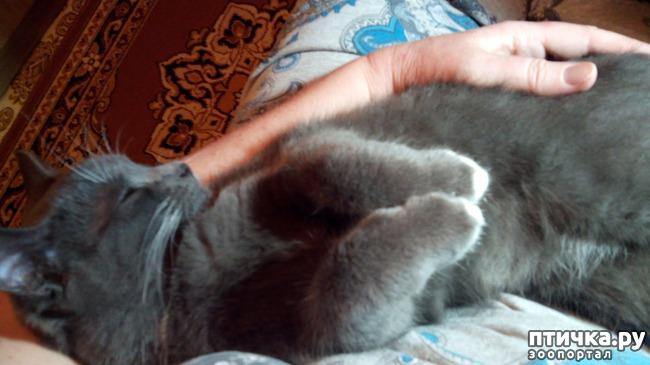 фото 7: Любимое дело - поспать