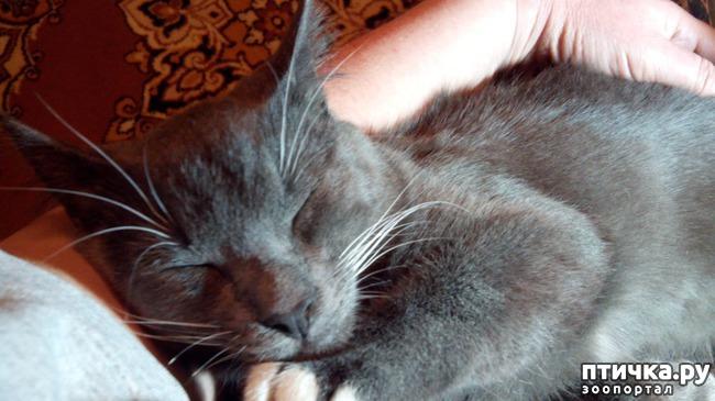 фото 8: Любимое дело - поспать