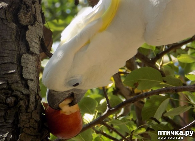 фото 9: Сказание о распоясовшейся птице