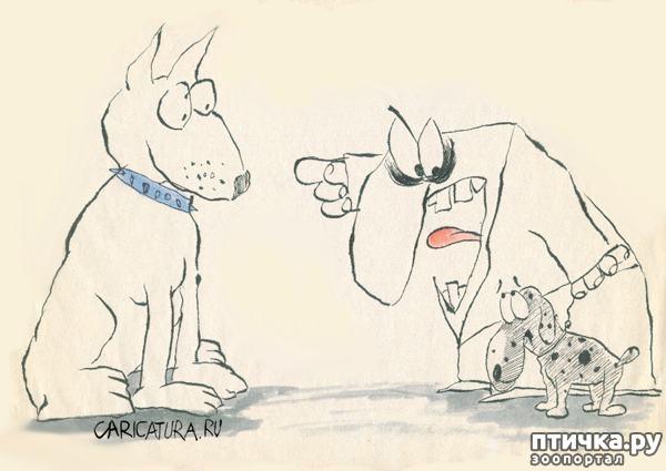 фото 14: В догонку к рисункам с синими котами. Карикатурные рисунки с собачками