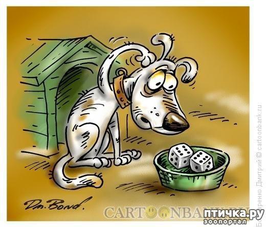 фото 17: В догонку к рисункам с синими котами. Карикатурные рисунки с собачками
