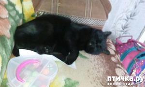 фото: Кот-помощник