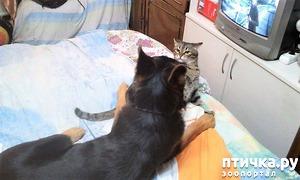 фото: Как найти в квартире кошку?