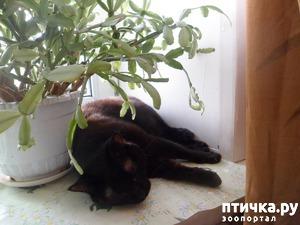 фото: В продолжение темы про сон)))