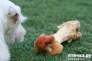фото: Можно ли собаке кости?