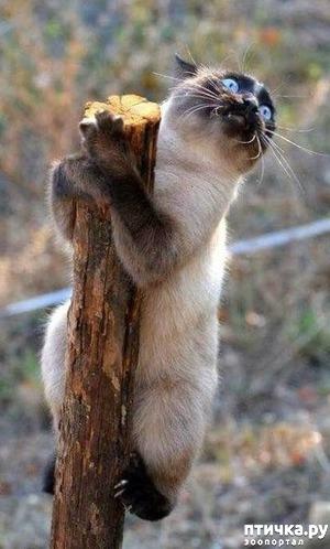 "фото: Когти кошки и ""борьба"" с ними"