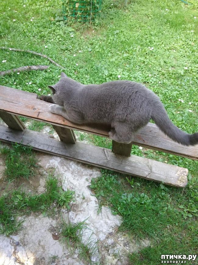 фото 3: Когти кошки и
