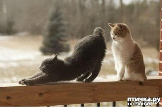 фото 4: Когти кошки и