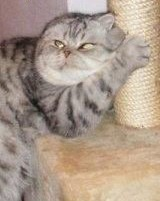 фото 6: Когти кошки и