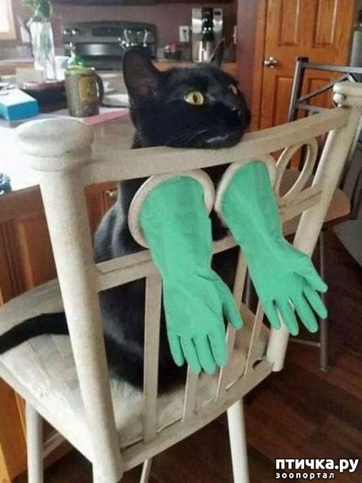 фото 5: Когти кошки и